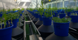 Automated Plant Phenotyping Systems
