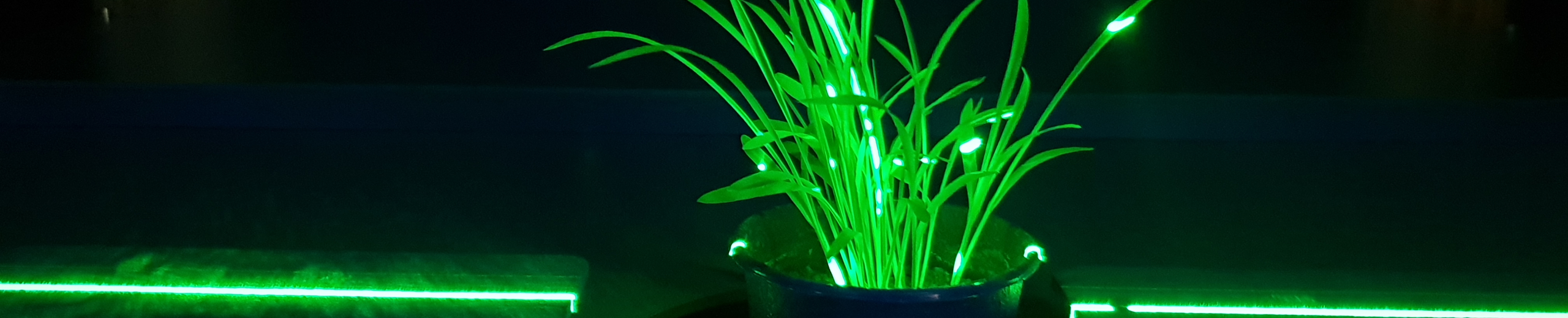 WPS Plant Phenotyping Abiotic Stress