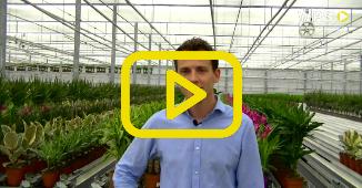 Sorteren en afleveren: Forever Plants