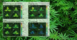 Pflanzenphänotypisierung