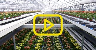 Automatisering teelt KP Holland
