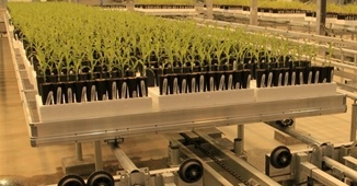 Bench-based phenotyping