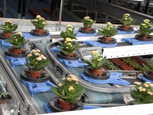 Automated Phenotyping