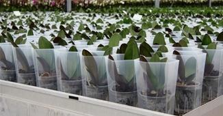 Plant Groei Cel