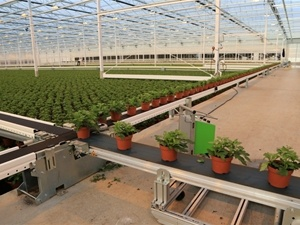 Semi-Automated Phenotyping