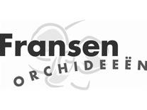 fransenorchidee