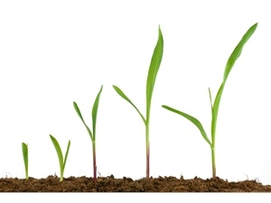 Plant Growth Analysis