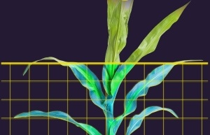 Transfer learning in Plant Phenotyping