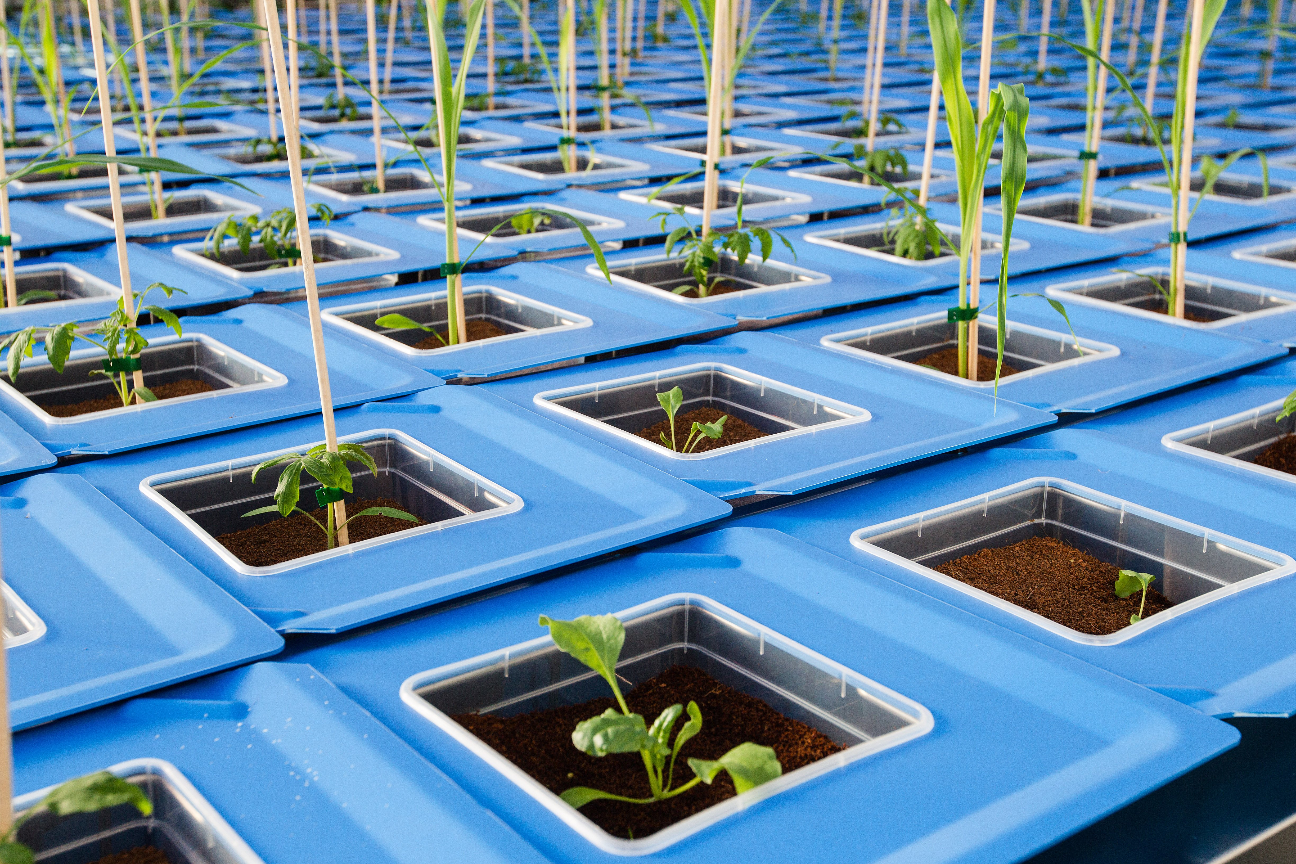 WPS systeem plant phenotyping