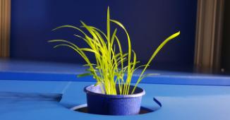 Plant Hyperspectral Imaging