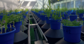 Plant Thermal Imaging